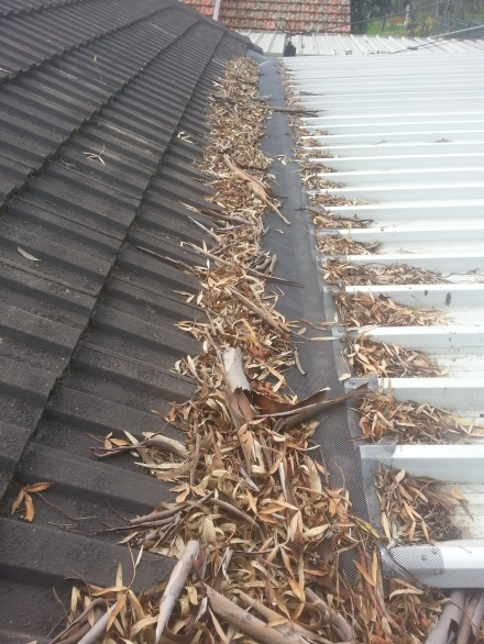 gutter mesh 1 leaves.jpg
